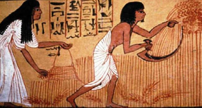 Egyptian Farming for kids ***