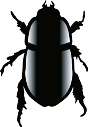 Picture of a Scarab Beetle